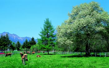 終了いたしました。森本二太郎写真展「人と自然の架け橋」4月4日~10日