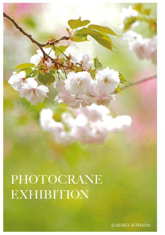 「花に親しみ花を撮る」 Photocrane写真展
